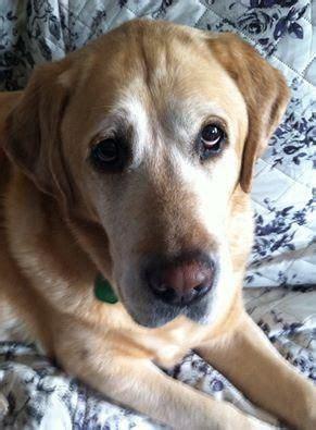 images  dogs   adoption  nny  pinterest
