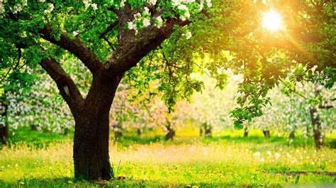Dslr Hd Background by Hd Backgrounds Dslr Wallpaperhd Wiki