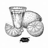 Drawing Alcohol Tequila Shot Glass Drink Vector Lime Bottle Mexican Liquor Sketch Cocktail Illustration Clip Bar Getdrawings Fruit Illustrations Citrus sketch template