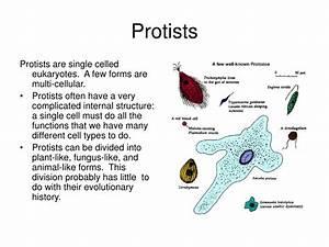 Ppt - Protists Powerpoint Presentation