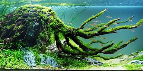 Aquascape Environmental by Understanding Biotope Aquascaping Style The Aquarium Guide