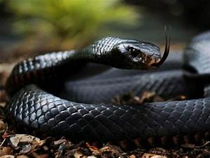 The Most Dangerous Snakes In The World | Playbuzz