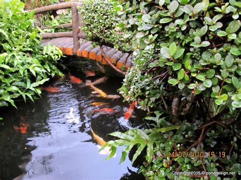 fishing pond design 25 genius fishpond design tierra este 59501