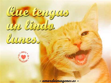 hermosas imagenes de animales  frases de feliz lunes