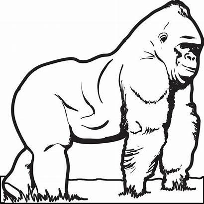 Gorilla Coloring Animal Gorilas Sheet Colorir Malvorlagen