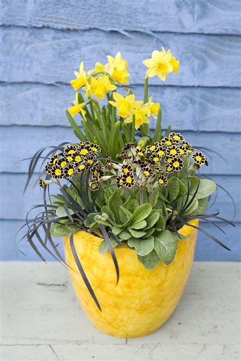 17 best images about potted bulbs on