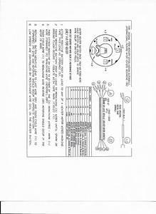 Packard Wiring Diagram