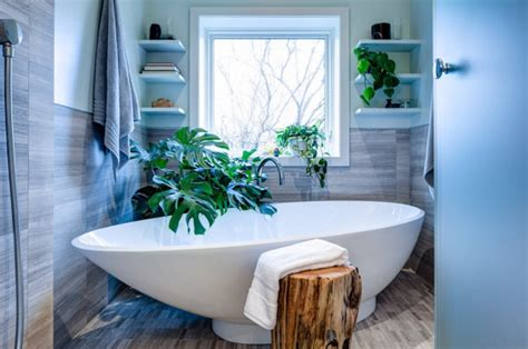 Best Plants For Bathroom No Window by The Best Bathroom Plants For Your Interior