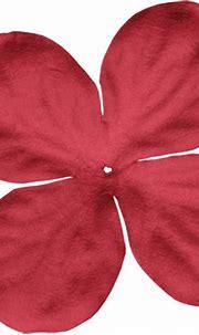 0_9de24_231bdc5_L.png (500×484) | Flower petals, Petals ...