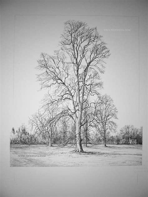 Best Woodland Nature Scene Images Pinterest