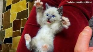 Surprised Kitten | www.pixshark.com - Images Galleries ...