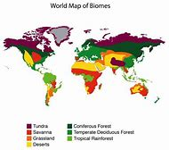 Best 25 ideas about biomes find what youll love tropical rainforest biome world map gumiabroncs Images
