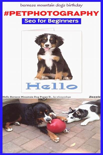 Bernese Mountain Dogs Mix Birthday Poodle Puppy