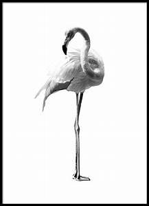Flamingo Schwarz Weiß : flamingo black and white poster ~ Eleganceandgraceweddings.com Haus und Dekorationen