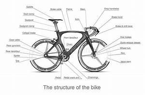 Infographic Of The Structure Of Bike Stock Vector