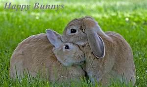 Kaninchenkäfig Für 2 Kaninchen : richtige ern hrung f r kaninchen ~ Frokenaadalensverden.com Haus und Dekorationen