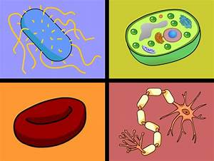Diagram Plant And Animal Cells And Blood