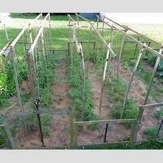 Best 25+ Tomato Trellis Ideas On Pinterest  Tomato Cages