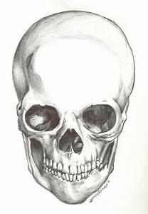Half Skull Half Face Tumblr Drawing Celebrity face's skull ...