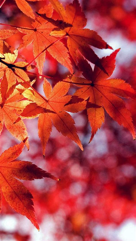 Fall Backgrounds For Iphone by 30 Free Fall Iphone Backgrounds Freecreatives