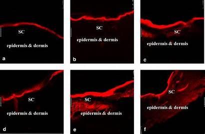 Fluorescence Dye Rhodamine Fluorescent Clsm Hydrophilic Represented