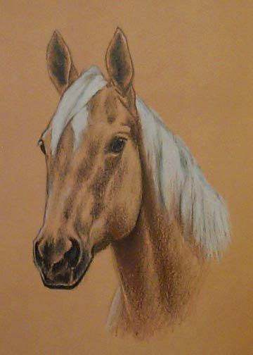 quarter horse head drawing completed commissions horses