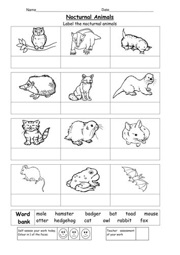 name the nocturnal animals by ruthbentham teaching