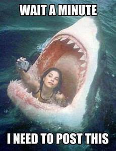 1000+ images about Shark Diving! on Pinterest | Sharks ...