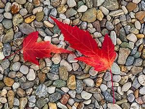 Kostenlose Bilder Herbst : herbst kostenlose herbstbilder hintergrundbilder ~ Yasmunasinghe.com Haus und Dekorationen
