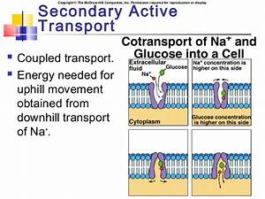 Chapter06 Membrane Transport And The Membrane Potential
