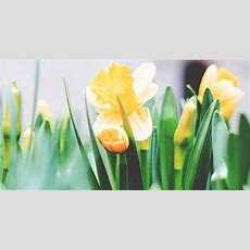 How To Biblically Celebrate New Life In The Spring