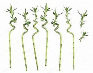 Bambus Pflege In Der Vase : bamb fortunato su sfondo bianco foto stock epitavi ~ Lizthompson.info Haus und Dekorationen