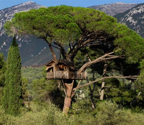 picture  dream tree houses