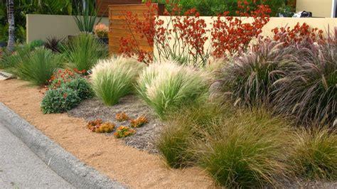 kangaroo paw garden design debora carl landscape design contemporary landscape