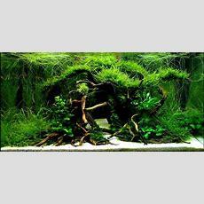Aquarium Driftwood  Manzanita Wood, Sumatra Wood, Redmoor