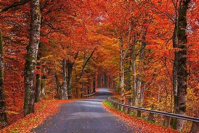 Road Autumn Sweden Fall Trees Nature Foliage