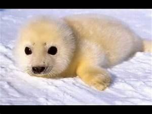 My top 10 cutest animals - YouTube  Cutest