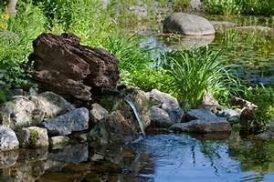 Plante Filtrante Pour Bassin : quelles plantes aquatiques pour votre bassin entretenez et embellissez votre jardin avec mr ~ Louise-bijoux.com Idées de Décoration