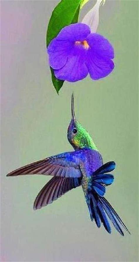 hummingbird morning glory everything on one line 3 of