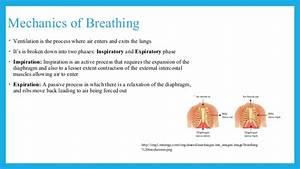 Physics Of Pneumothorax