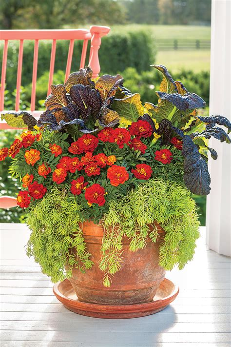 fall flowers   gorgeous autumn garden southern living