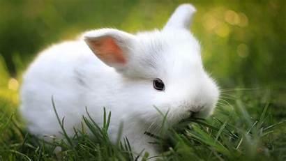 Bunny Wallpapers Rabbit Bunnies Desktop Cool Rabbits