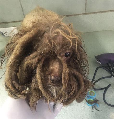 incredible transformation  dog left  dreads