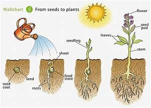 Growing Beans Islam From The Start