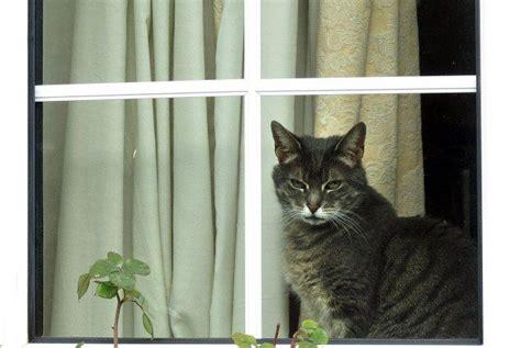gekippte fenster toedliche gefahr fuer katzen volat
