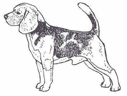 Beagle Dog Drawing Rubber Getdrawings Dogstampsplus