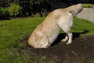 Hund Buddelt Im Beet : warum hunde graben und buddeln dogs4life ~ Markanthonyermac.com Haus und Dekorationen