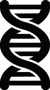 Free Clipart of a black and white dna strand double helix