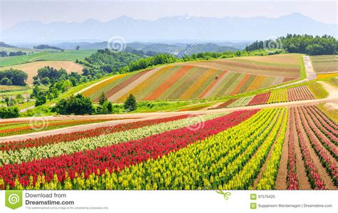 blumen in japan panoramisches buntes blumen feld im sommer hokkaido japan