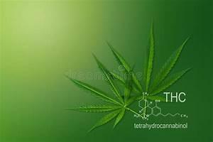 Cannabinoid Structure  Cannabidiol Molecular Structures